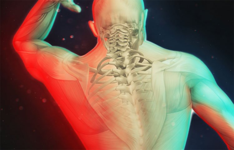 Specialist-Module-for-Personal-Injury-back